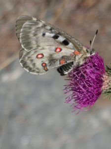 Butterfly on flower | © Valinza | Dreamstime Stock Photos